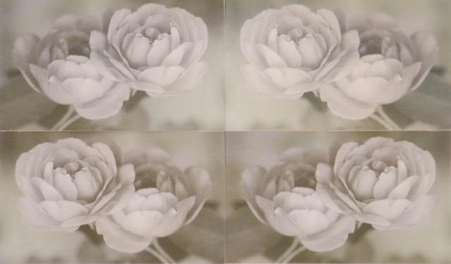 "Rosa  Image 6"" x 10""  Framed 12"" x 16"""