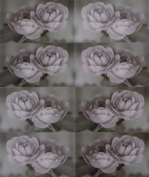 "Roses  11"" x 14"""