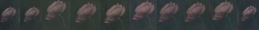 "Ten Roses  4 1/2"" x 34"""