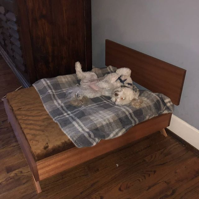 Another happy customer enjoying his pet bed designed and handcrafted by Modern Paw Furniture.