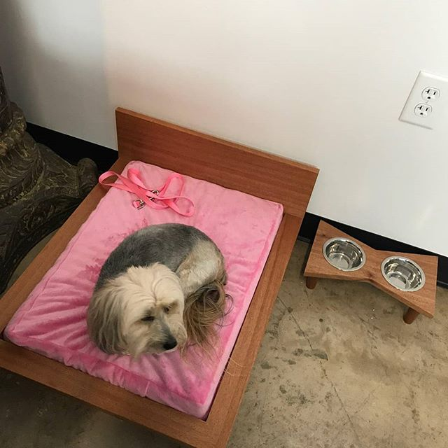 Look at that fur baby enjoying her new platform bed, pink mattress, and elevated pet feeder by Modern Paw Furniture!!