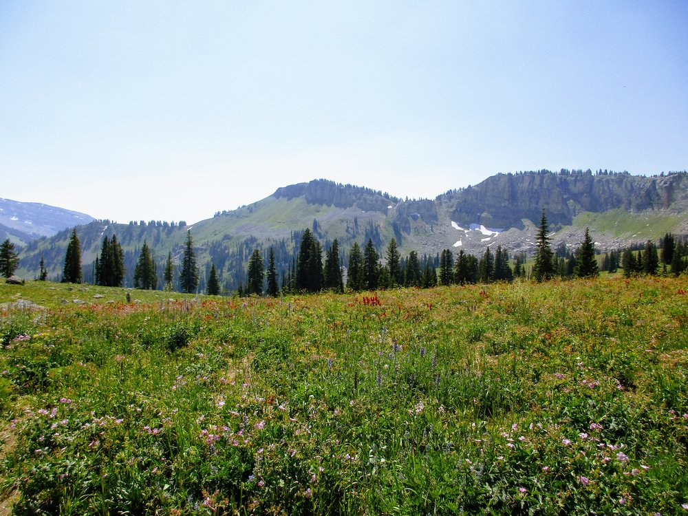 The wildflowers were ridiculous!
