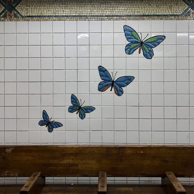 Family of four 🦋 By Ann Schaumberger w Miotto Mosaics . . . . . #UrbanOasis #NYC #subway #art #glass #mosaic #subwayart #AnnSchaumberger #MiottoMosaics #menagerie #FifthAvenue #CentralParkZoo #love #family #publicArt #butterflies #turtles #PolarBear #snailsofinstagram