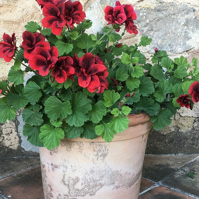 Mallorca. Mysterious. Majestic.🌺 . . . . . #nature #beauty #containergardens #geraniums #Spain #trail #water #wild #rustic #hiking #red #green #Mediterranean #ashramMallorca #magic #mystery 📷by @mee320