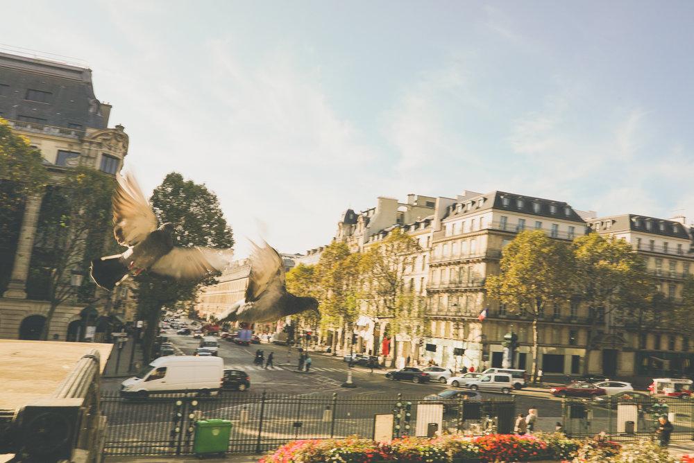 SCi 2016 10_Paris-0163.jpg