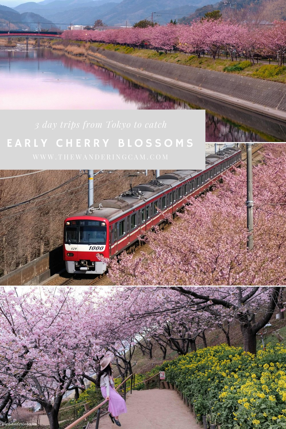 thewanderingcam_tokyoearlyblossoms-2.jpg