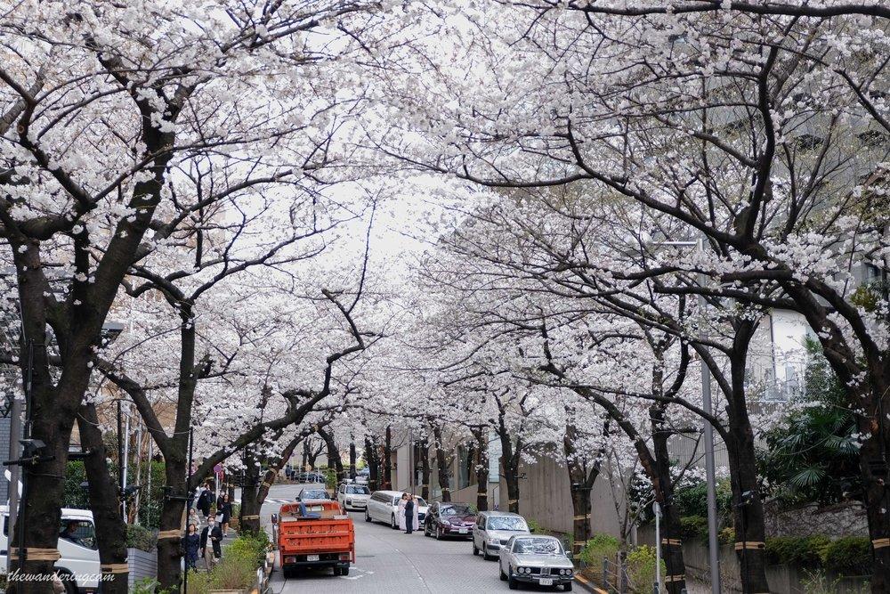 thewanderingcam_tokyo_sakura_arkhills-8586.jpg
