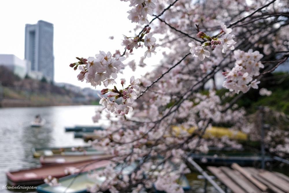 thewanderingcam_tokyo_sakura_canalcafe-8595.jpg