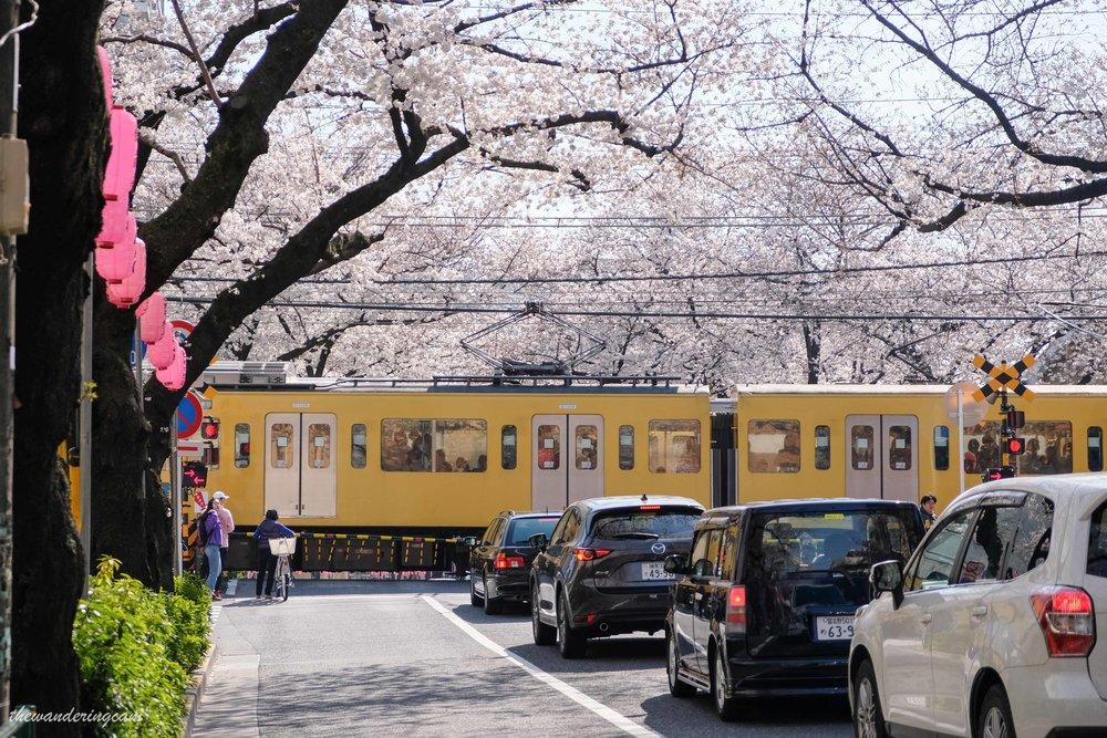 thewanderingcam_tokyo_sakura_nakano-8796.jpg
