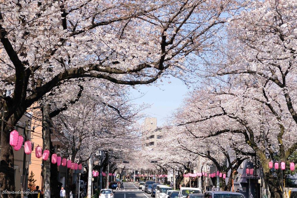thewanderingcam_tokyo_sakura_nakano-8786.jpg