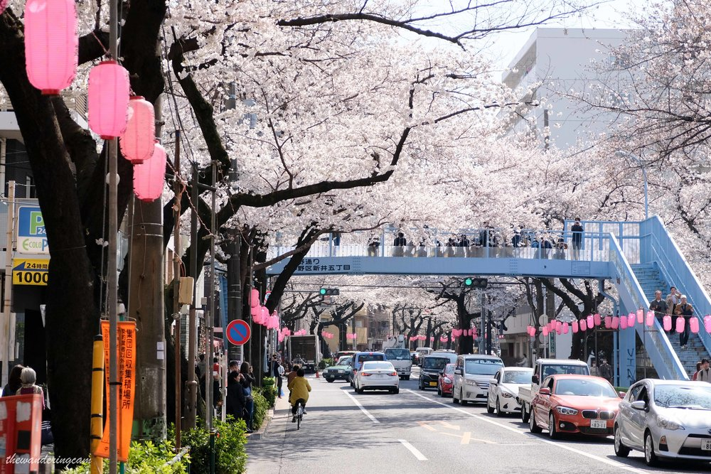 thewanderingcam_tokyo_sakura_nakano-8797.jpg