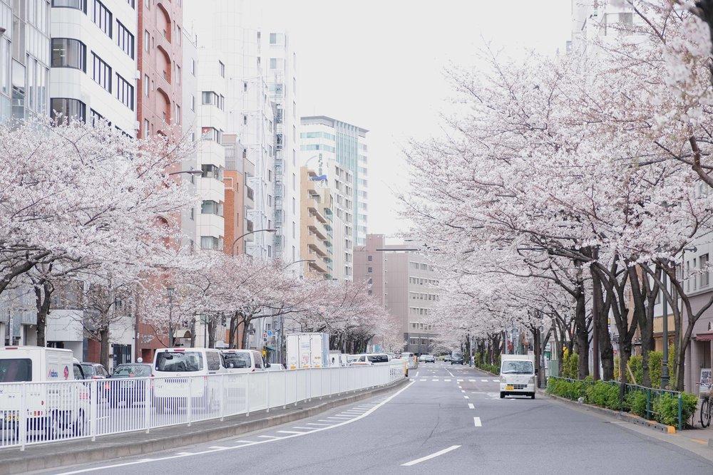 thewanderingcam_tokyo_sakura_hiroo-8491.jpg