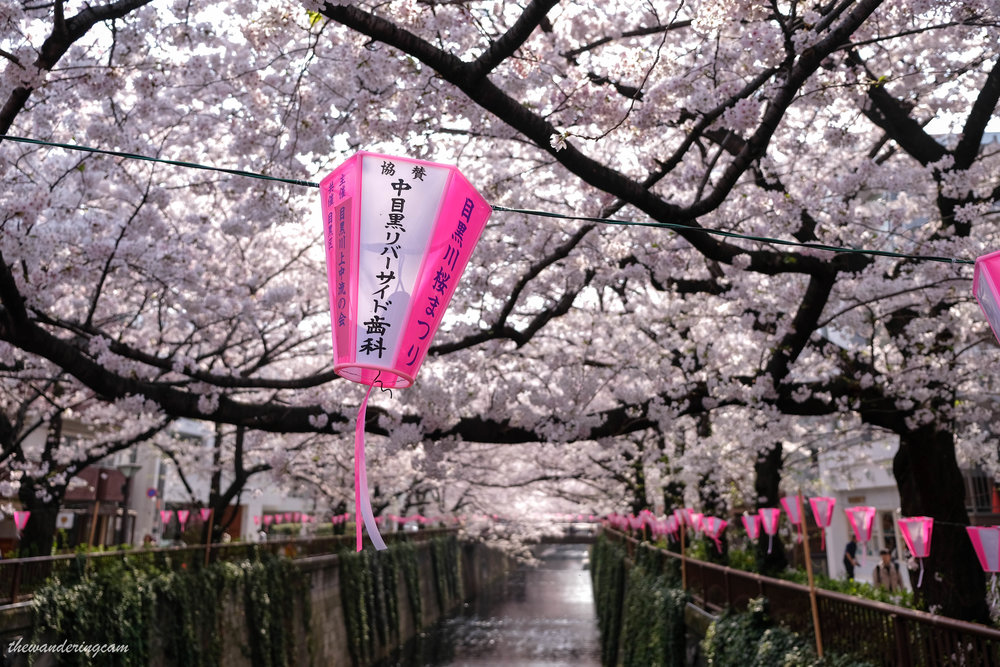 thewanderingcam_meguroriver_sakura-9121.jpg