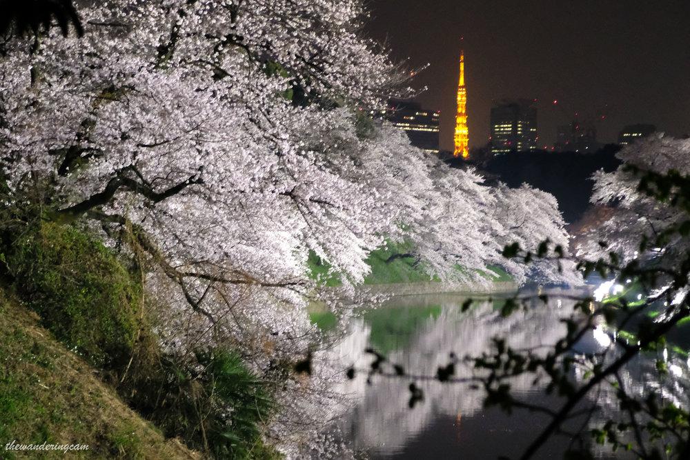 thewanderingcam_chidorigafuchi-9149.jpg