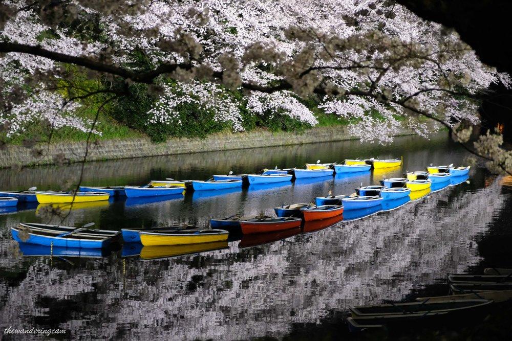 thewanderingcam_chidorigafuchi-9161.jpg