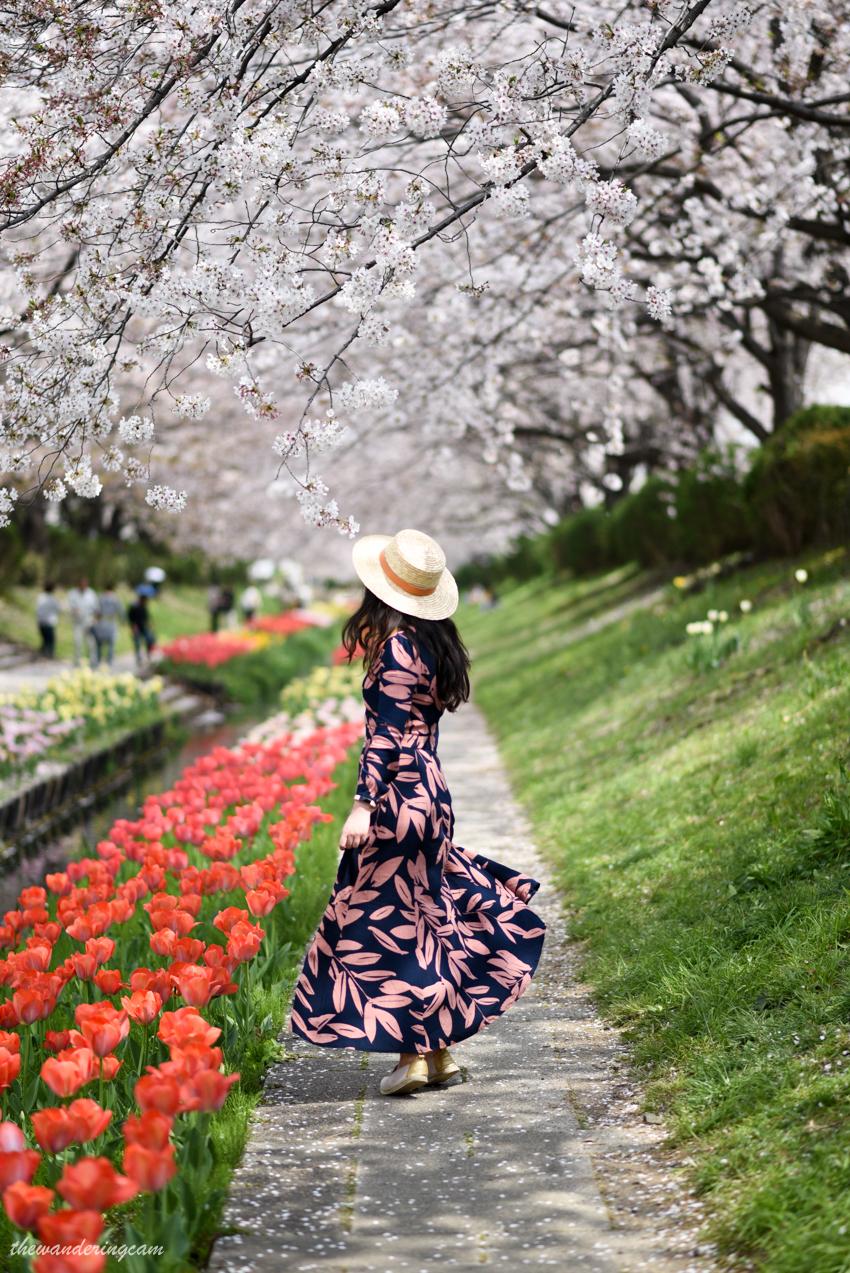 thewanderingcam_yokohama_hanami-7728.jpg