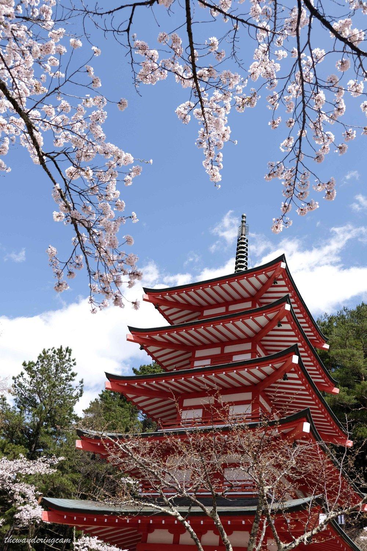 thewanderingcam_chureito pagoda_sakura-0822.jpg