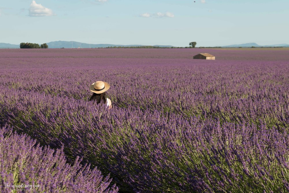 Lavender Fields France Map.Provence Part 2 Rolling Lavender Fields Of Valensole With Map