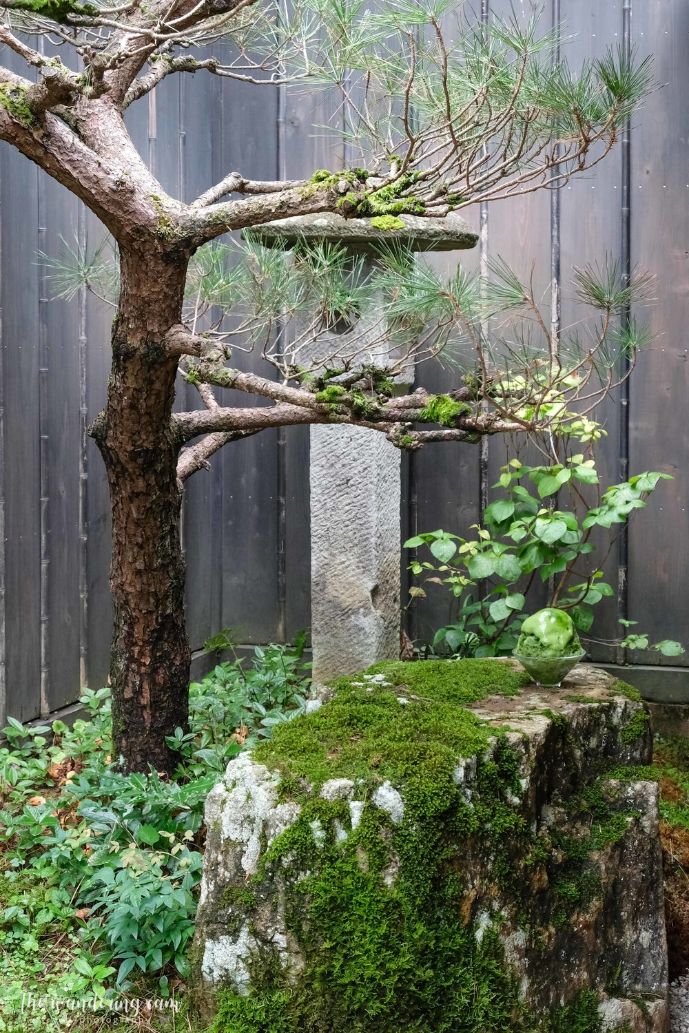 Can you spot the kakigori? It looks like it is grown from the moss…