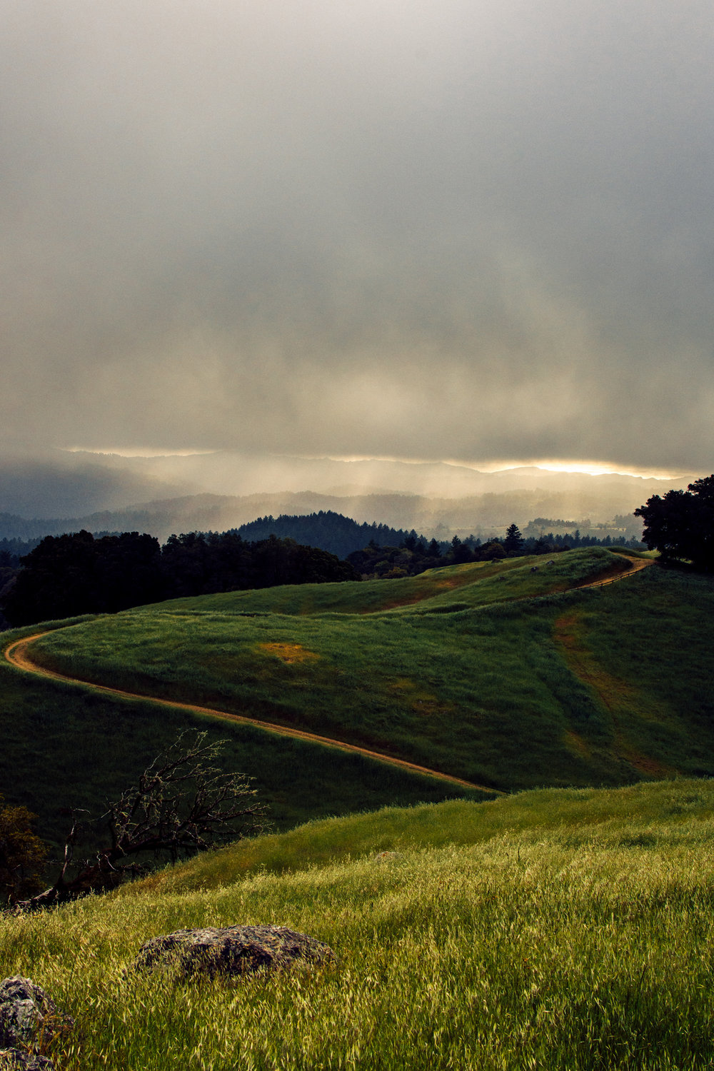 A quick shot from the top of the hill. I don't know exactly what the name of it is but it is off of Skyline Boulevard about 10 minutes north of the highway 9 intersection. I captured a good amount of sun rays before the clouds completely blocked out the sun from hitting the hills. Although in the distance I could still see the ocean being hit with the rays.