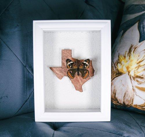 Frames — Bug in the box framed butterflies