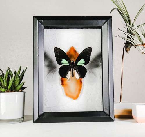 Frames — Bug in the box framed butterflies