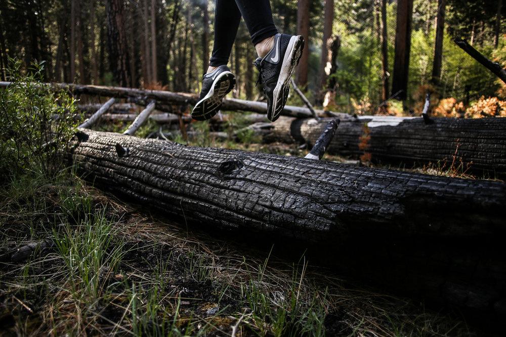 Sequoia_May2017-7944.jpg