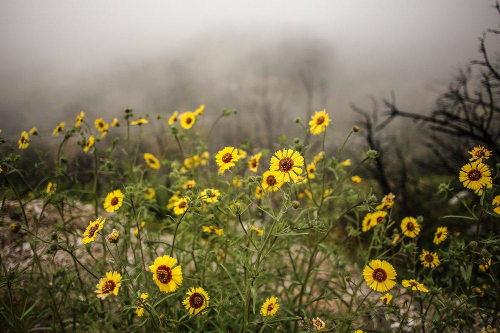 Sequoia_May2017-8080.jpg