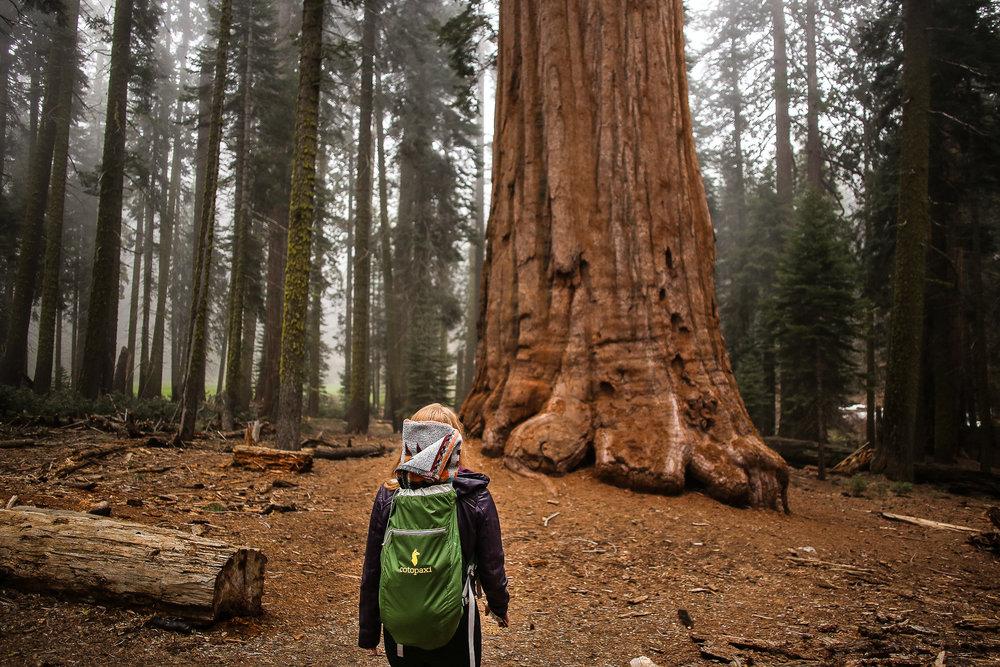 Sequoia_May2017-8421.jpg