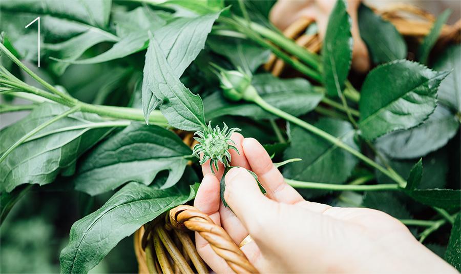 植物を採集します。