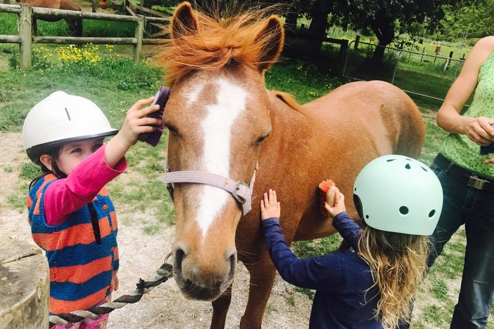 hira clubs horse care and riding