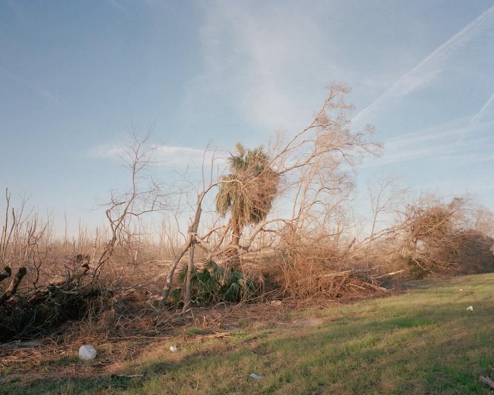 Untitled (Hurricane Damage)