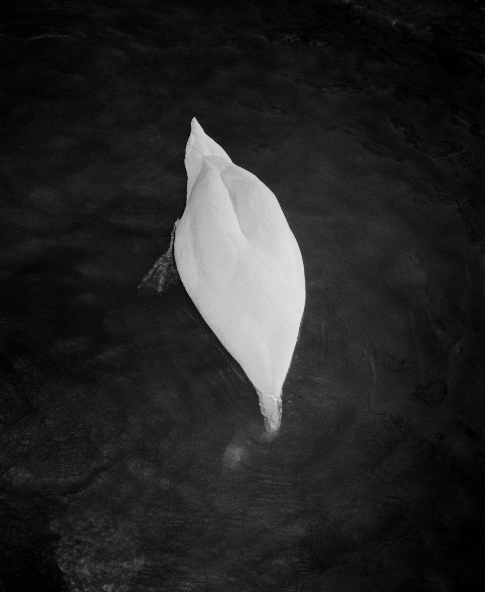 © Matt Eich