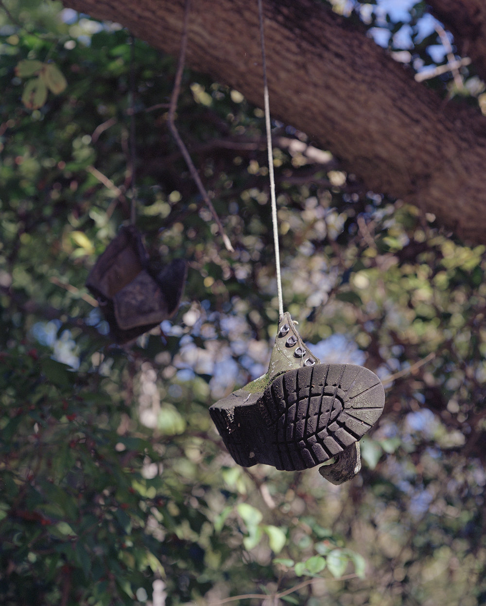 How's It Hanging  © Robert Gordon