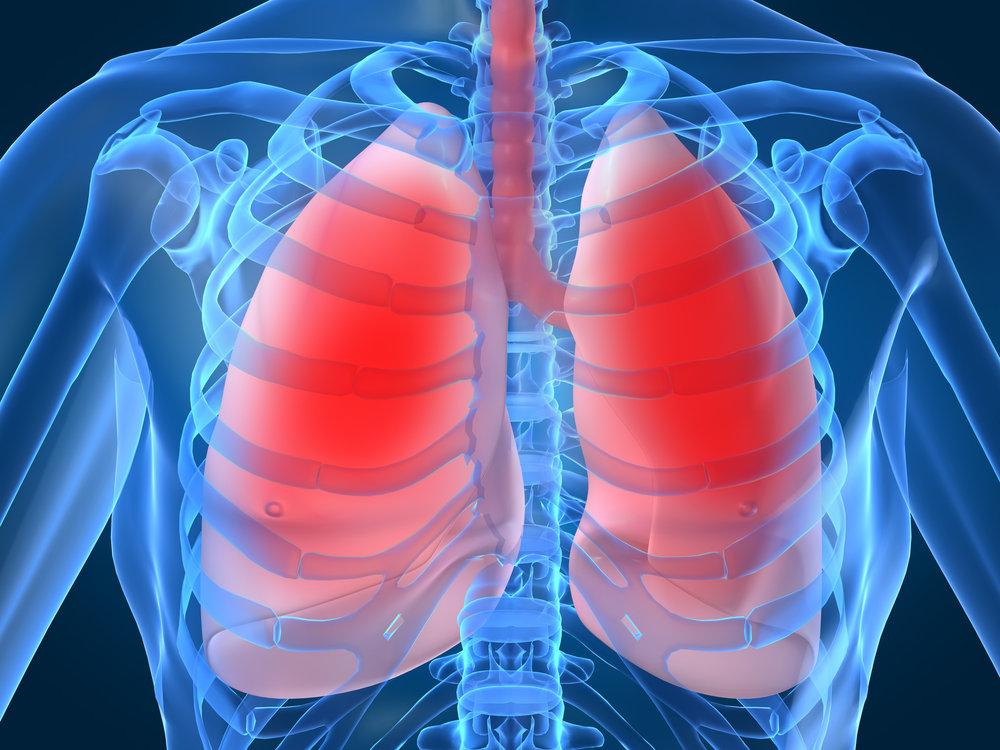 Human-Lung.jpg