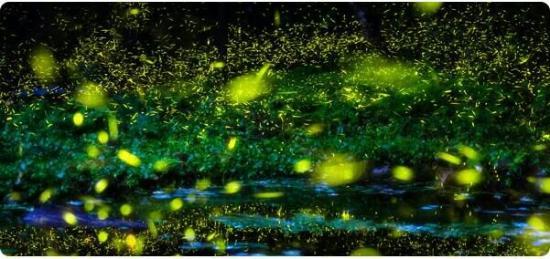 firefly -