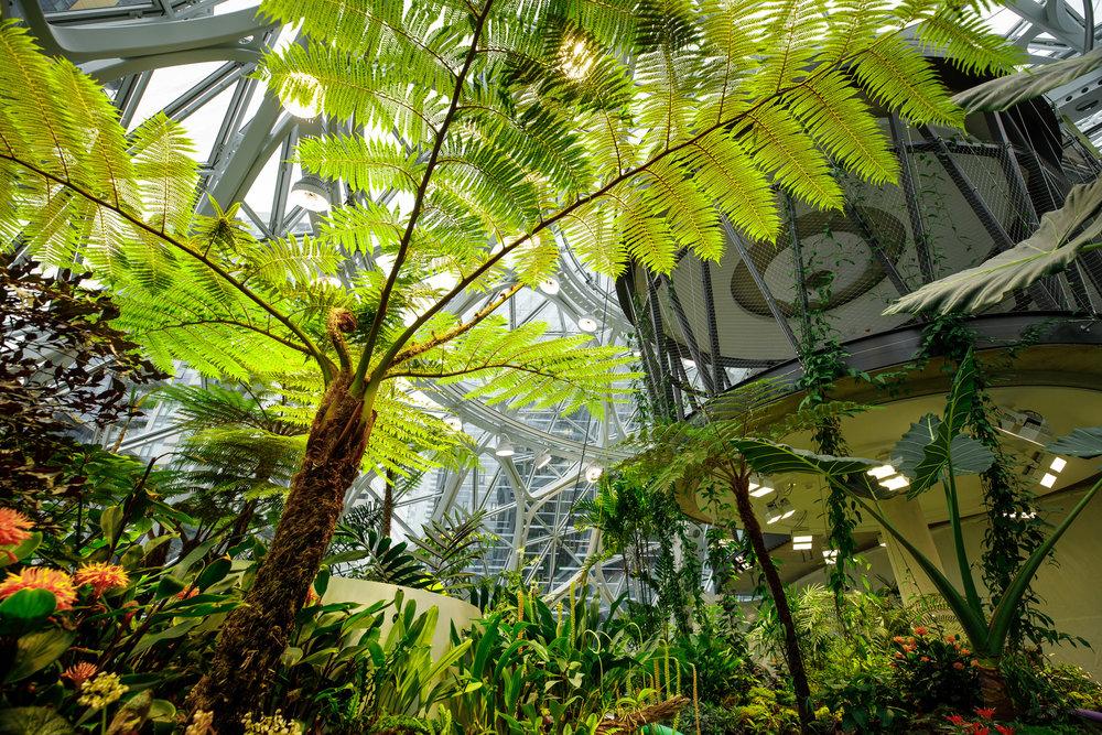 the-spheres-amazon-offices-seattle.jpg