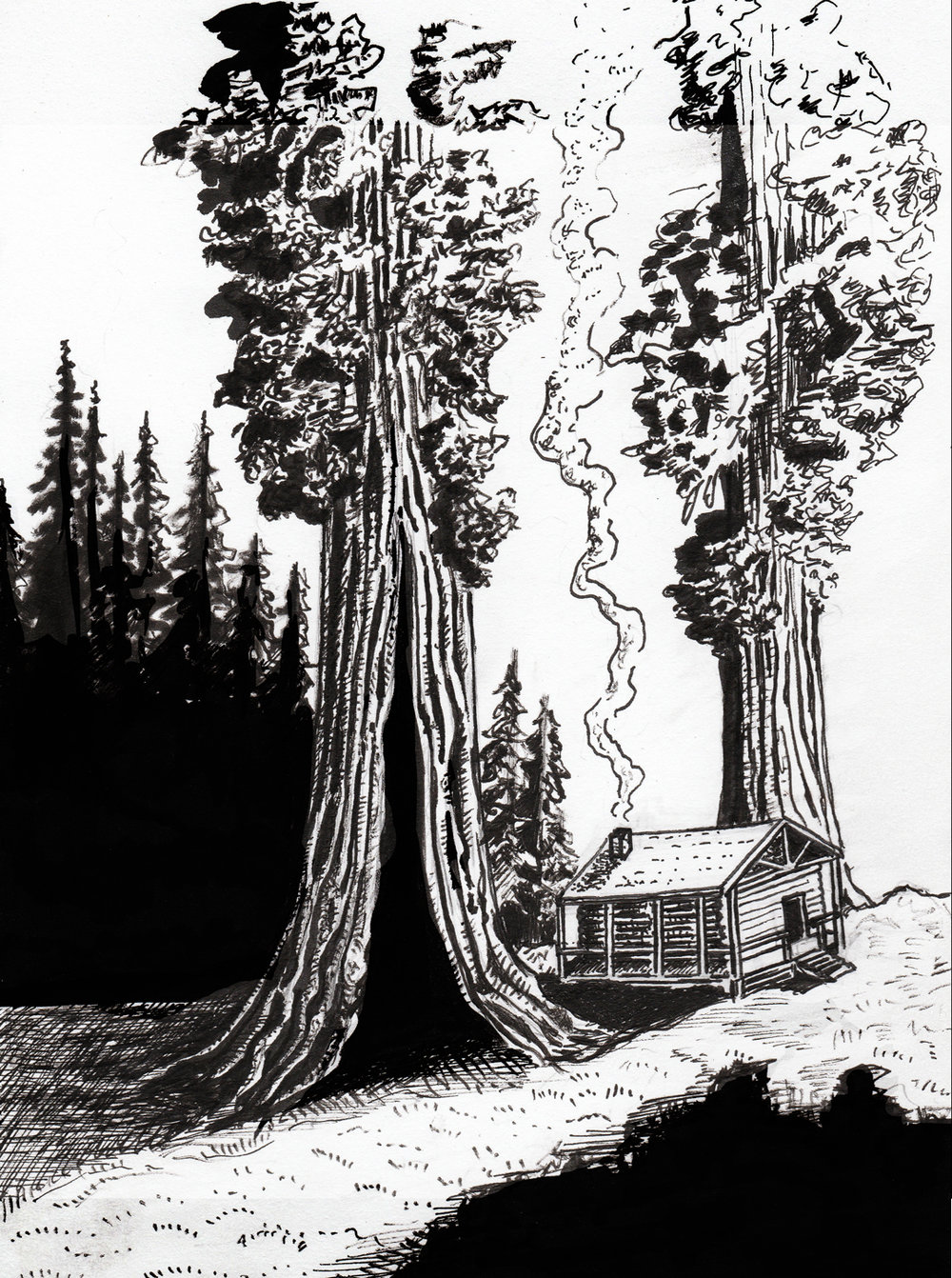 """Sequoia Hideout""  //  Sketchbook  //  Ink  //  October 2017"