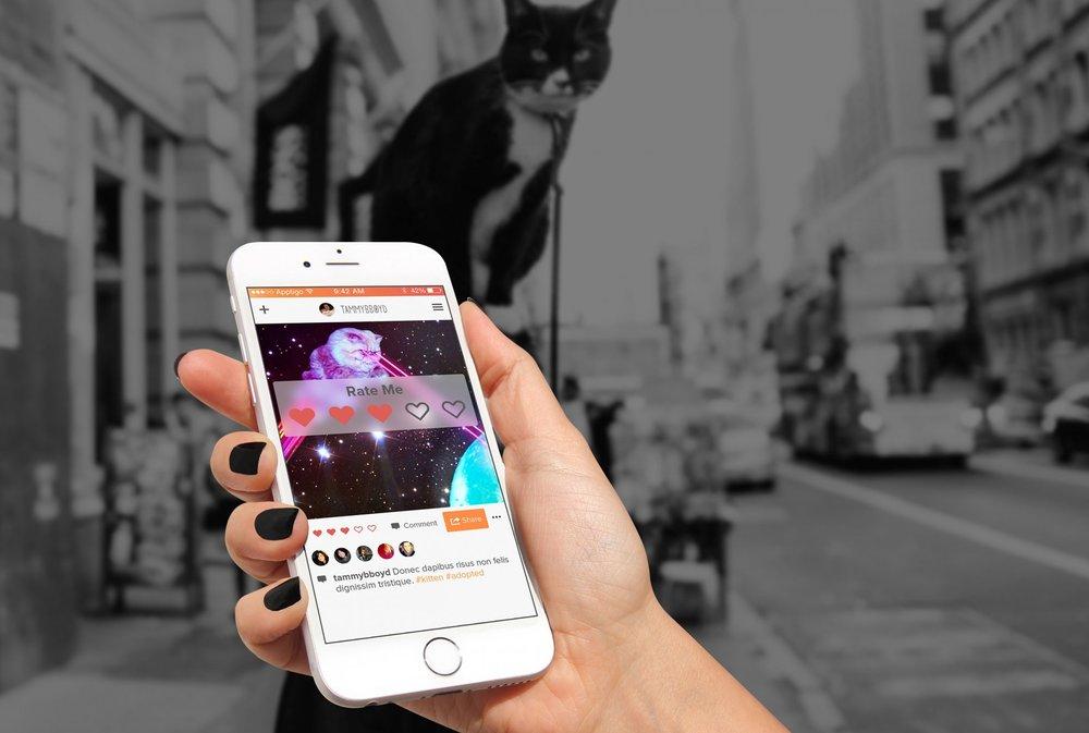Happy-New-Meow-Apptigo-Debuts-Cat-Centric-Social-Sharing-App.jpg