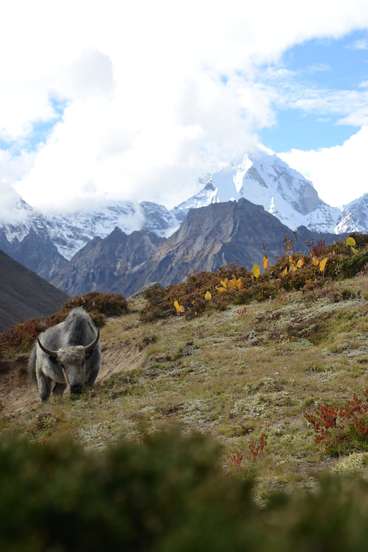Nepal 2.jpg