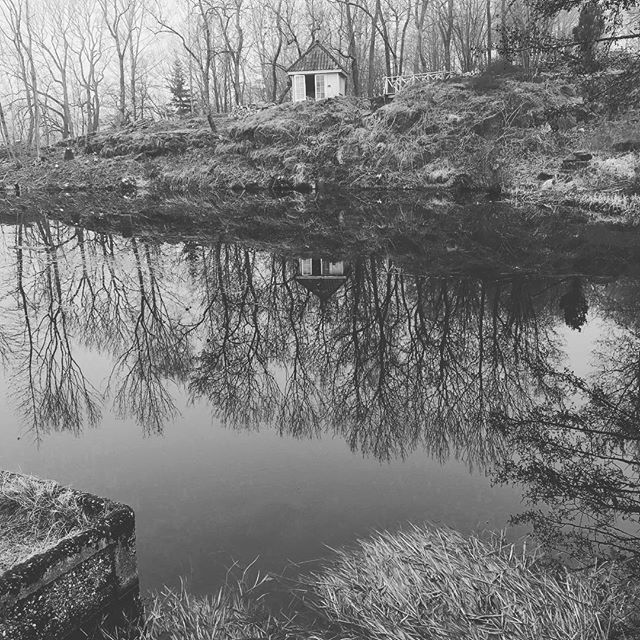 Speiling i dammen, mens vi venter på den grønne løvspretten... 🍃 #røedpåjeløy