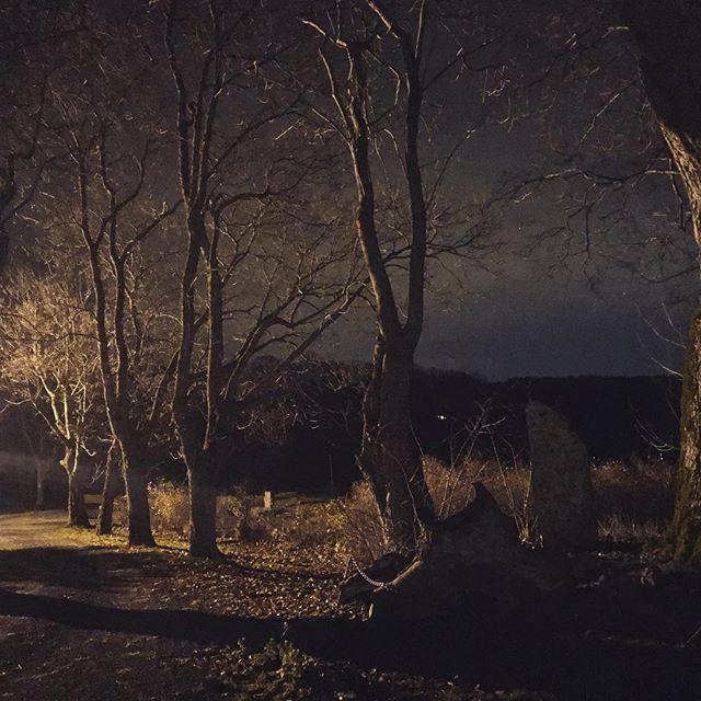 Mot alleen fredag kveld... #røedpåjeløy #drengestua