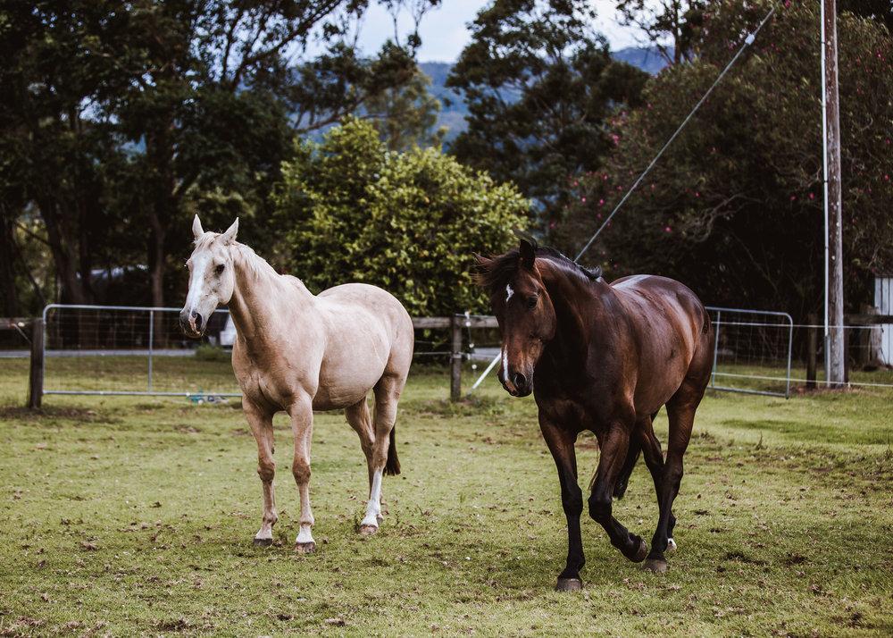Horses-20.jpg