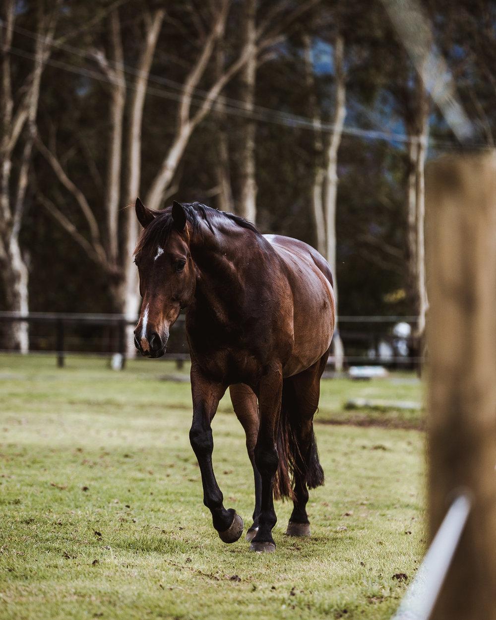 Horses-17.jpg