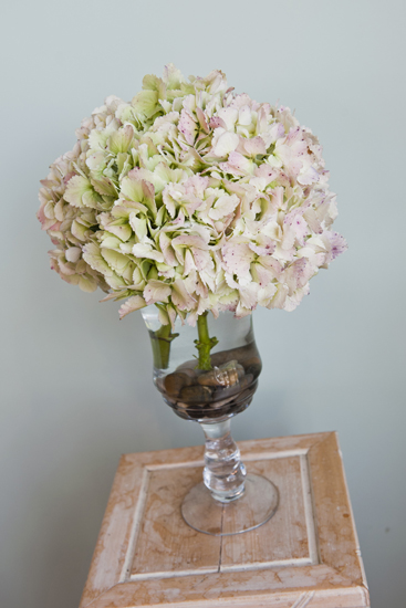 Flowers Make Scents hydrangeas