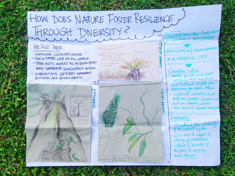 Sketches from my final project: exploring the characteristics of the Ajo tree, an emergent in the rainforest, and how they can inform the development of a creative city.