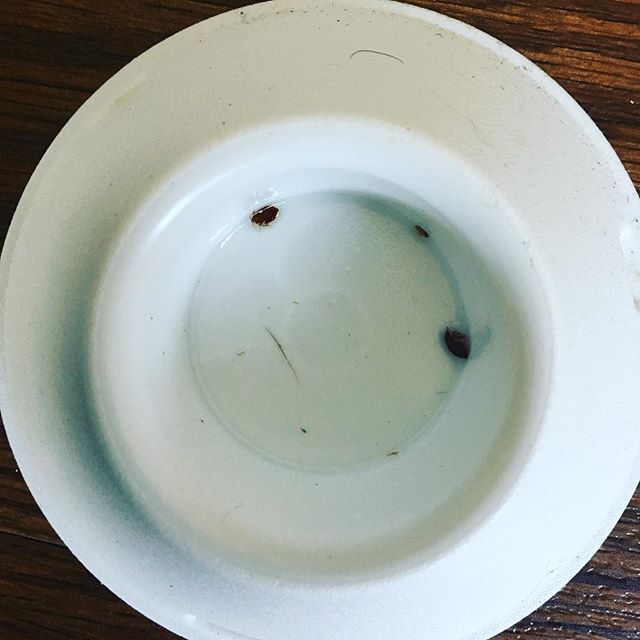 An example of a bed bug lure successfully attracting bugs! #detecttreatprevent #bedbugs