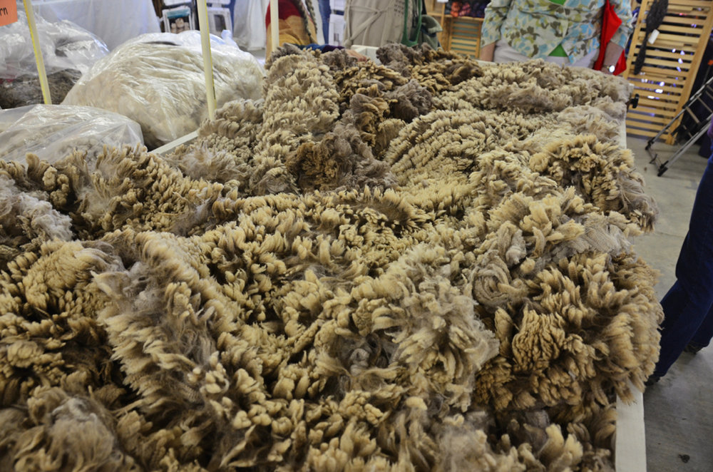 Inspecting a Merino wool fleece on a skirting table