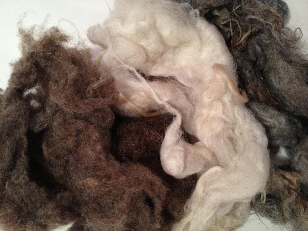 Washed Shetland Fleece © 222 Handspun