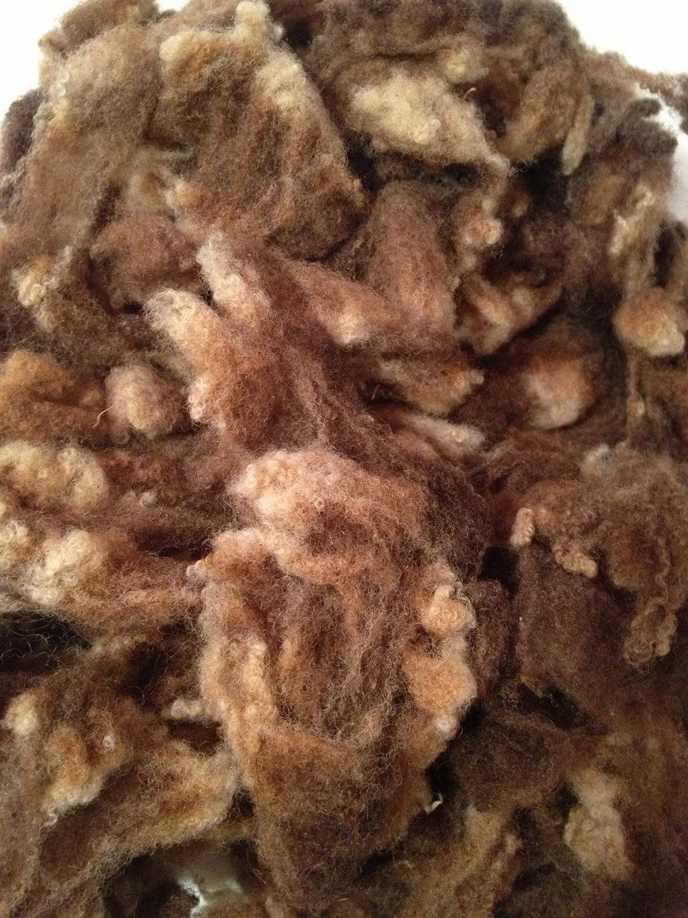 Washed Manx Loaghtan Fleece   © 222 Handspun